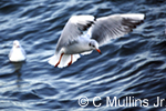 seagull hovering over water in Gdansk harbor